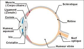 Schéma de cornée
